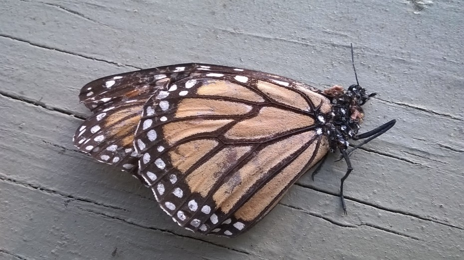 Dead monarch